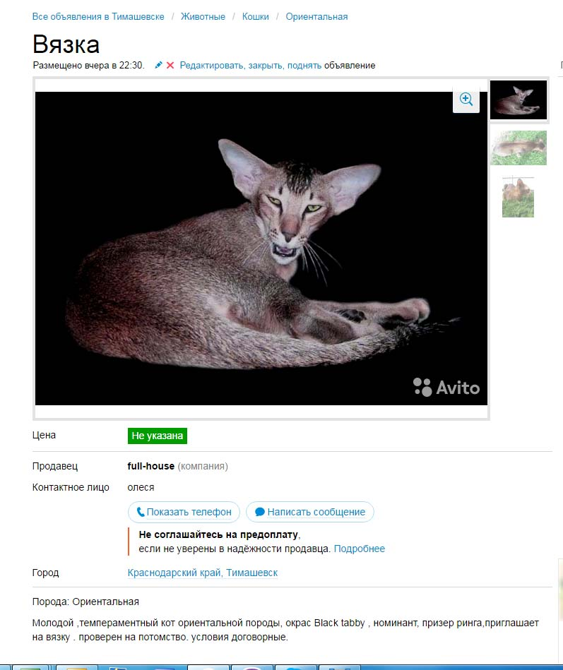 Авито кот вязка нижний новгород